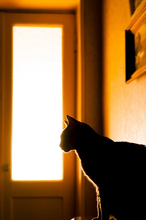 الصور الظلية (Silhouette)